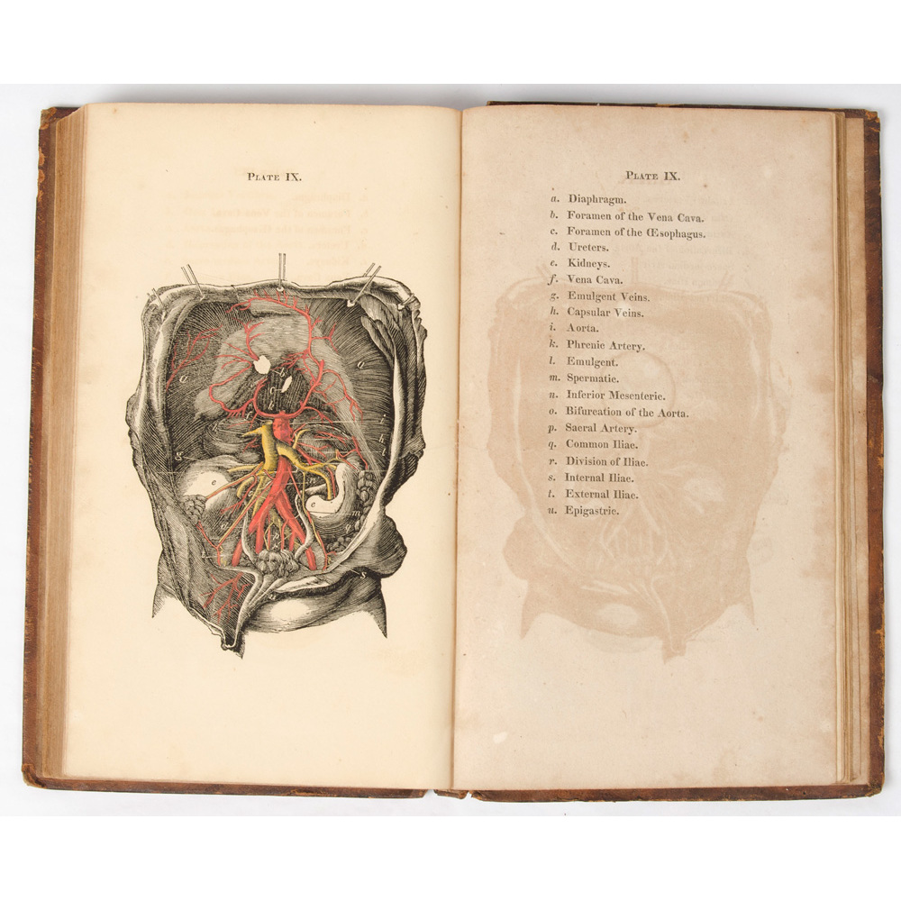 Medicine Anatomy Color Illustration Early American Medical Book