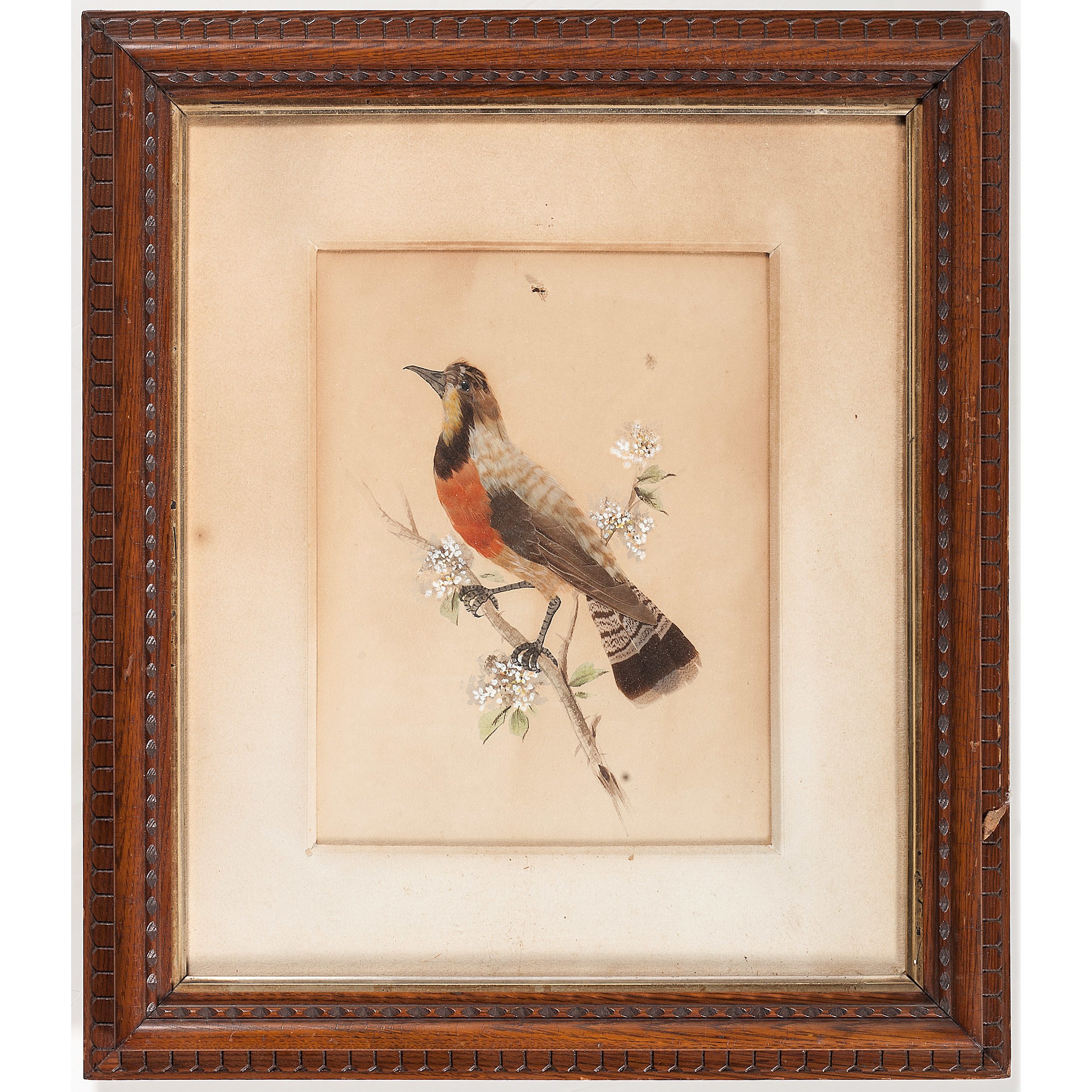 Victorian Real Feather Birds In Original Frames Cowan S