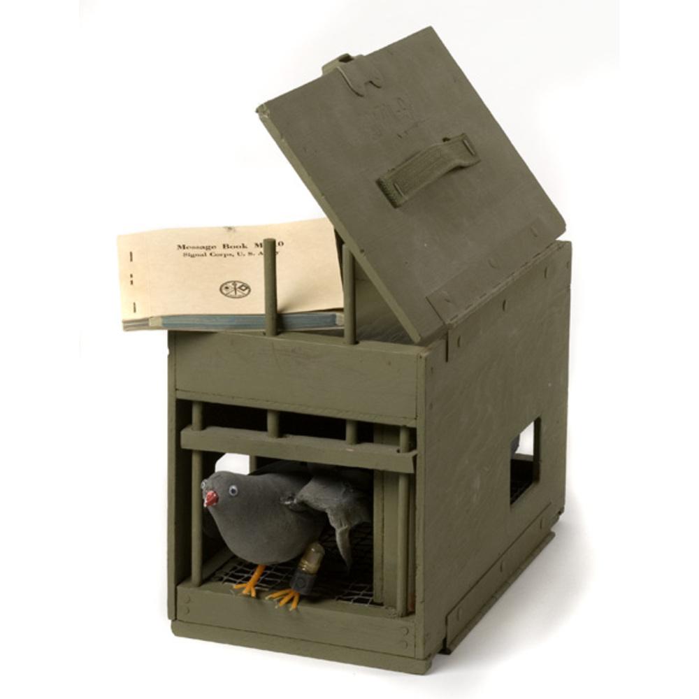 World War 1 Canadian Soldiers Messenger Pigeon 1917 6x5 ... |Wwi Messenger