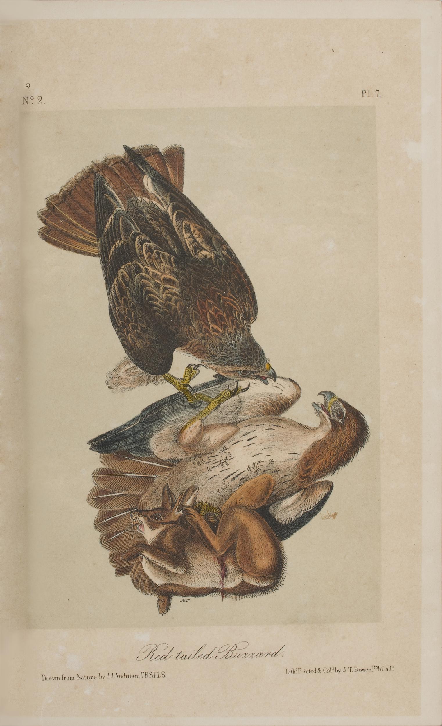 The Birds Of America By John James Audubon Cowan S