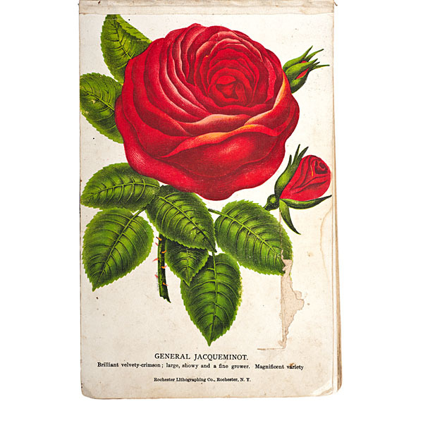 Nurseryman's Stock Book from New York State