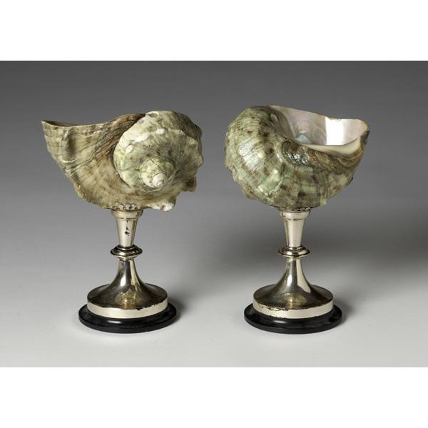 Brass Mounted Shells