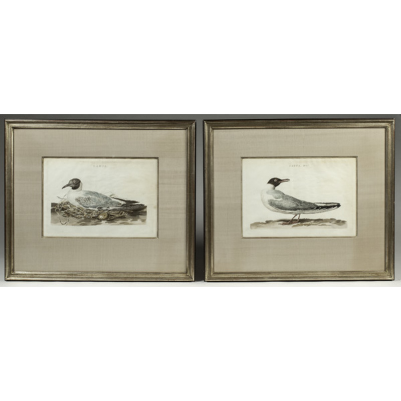 Pair of Hand Colored Bird Engravings by Cornelius Nozeman
