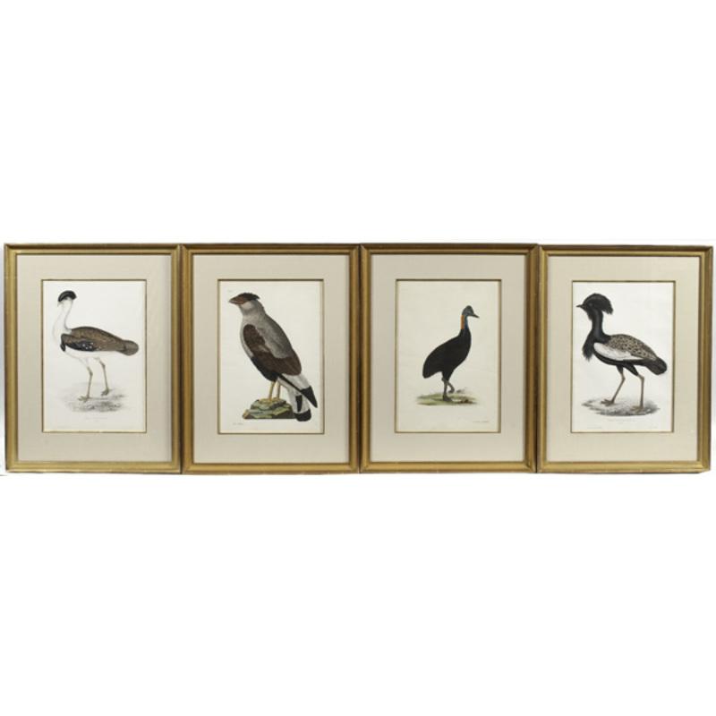 Fine Antiquarian Avian Engravings