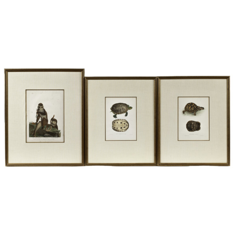 Antiquarian Engravings of Turtles and Monkeys