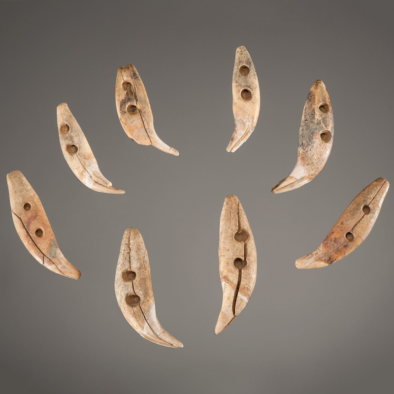 Hopewell Double Drilled Bear Teeth, From the Collection of Jan Sorgenfrei