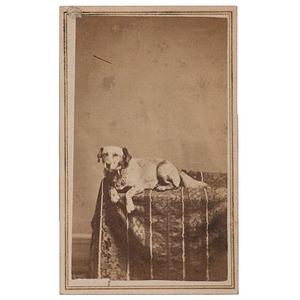 Abraham Lincoln's Dog Fido, Scarce CDV