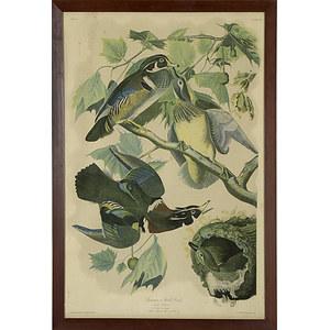 Audubon Print, Plate 391, Summer or Wood Duck,