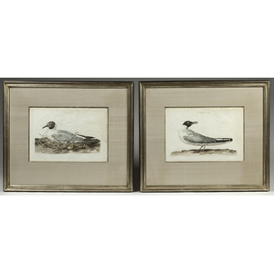 Pair of Hand Colored Bird Engravings by Cornelius Nozeman