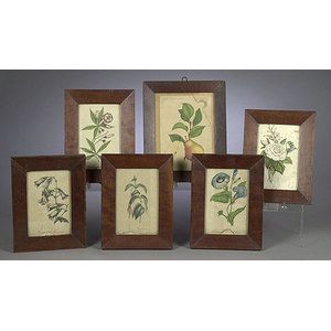 Six Early Framed Botanical Prints,