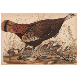 Audubon Double-Elephant Folio Hand-Colored Engraving, Great American Hen & Young, Engraved by W.H. Lizars