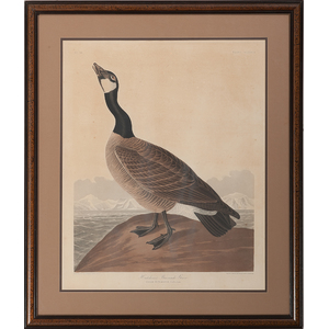 Audubon Hand-Colored Engraving, Hutchins's Barnacle Goose , Havell Edition