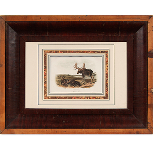 Audubon Prints, Common Arctic Puffin, Large Billed Puffin, and Moose-Deer, Bowen Edition