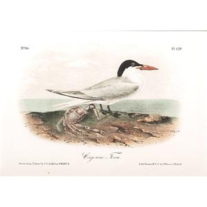Audubon Avian Prints, Bowen Edition