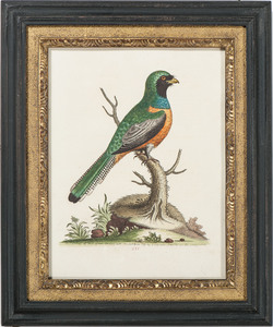 Hand-Colored Avian Prints by George Edwards and Eleazar Albin