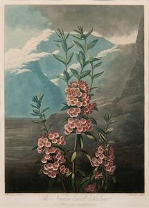 Robert John Thornton (British, 1768-1837) Aquatint