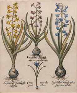 Basilius Besler (German, 1561-1629) Hand-Colored Engravings, Plus, Lot of Six