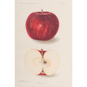 Collection of Apple Prints by A. Hoen & Co.