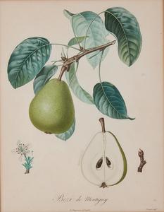 French Fruit Botanical Stipple Engravings