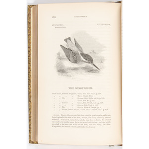 [Ornithology - Illustrated] A History of British Birds by William Yarrell, 1843, Three Volumes in Fine Binding