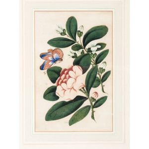 Chinese Export Botanicals