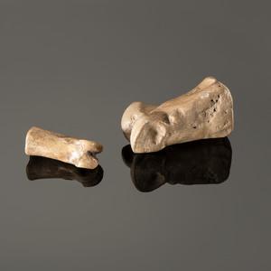 A Deer and Elk Toe Bone Archaic Game, Longest 2 in.