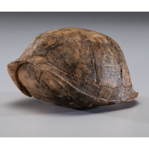 A Turtle Shell Rattle, 4-1/2 in.