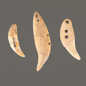 Three Hopewell Bear Teeth, Longest 3-3/8 in.