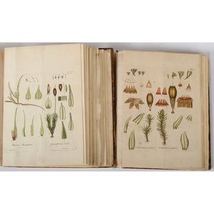 [Illustrated - Botany] Johann Hedwig, Species Muscorum - on Mosses - With 100 Hand Colored Plates