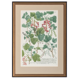 Ten Botanical Engravings, William Curtis and James Sowerby