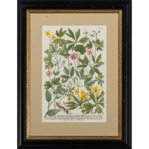 German Botanical Hand-Colored Prints