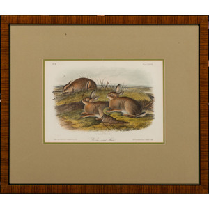 Audubon Hare Hand-Colored Engravings, Black-Tailed Hare and Worm-Wood Hare, Octavo Bowen Edition