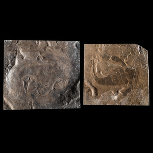 A Pair of Positive and Negative Eurypterid Plates