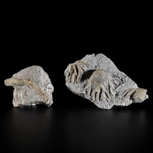 Pyratized Crinoids in Silica Shale