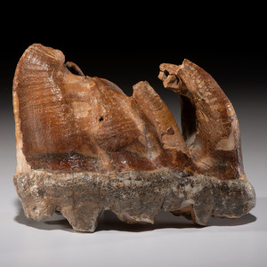A Mastodon Tooth