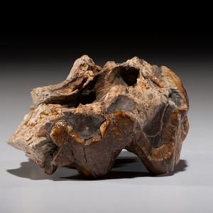 A Broken Mastodon Tooth