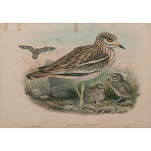 Gould and Richter Avian Lithographs, Lot of Three