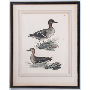 Hand-Colored Print of Ducks