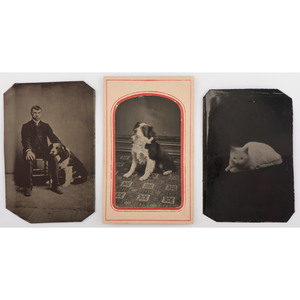 Trio of Tintypes Showing Cat and Dogs