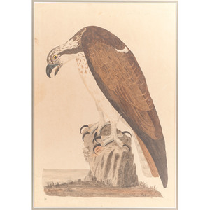 Engraving by Peter Mazell after Peter Paillou (English, 1757-1831), The Bald Buzzard
