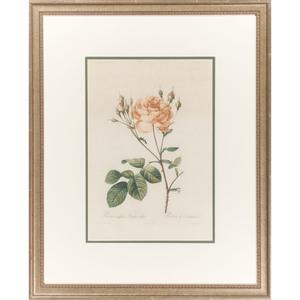 Botanical Prints after Pierre-Joseph Redouté (French, 1759-1840),