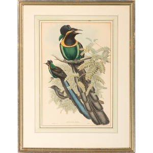 Five Hand-Colored Avian Engravings by Gould and Hart