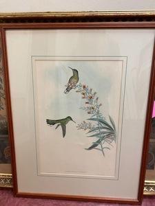 Gould and Richter Hummingbird Lithograph