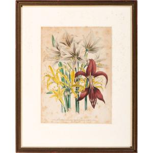 Four Hand-Colored Bowen Edition Audubon Prints and Two Jane Loudon Botanical Prints