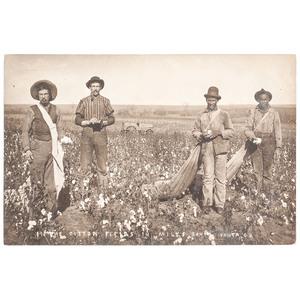Cotton Workers Real Photo Postcard, Near Ponca, Oklahoma, circa 1909