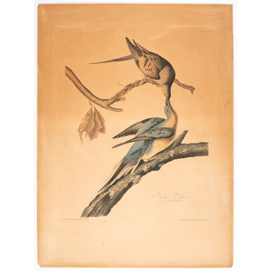 A Hand-Colored Audubon Engraving, Havell Edition Plate 62, Passenger Pigeon