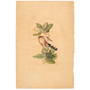 A Hand-Colored Audubon Engraving, Havell Edition Plate CLXIX, Mangrove Cuckoo
