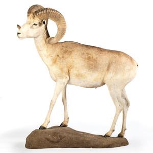 A Dall Sheep Full Body Mount