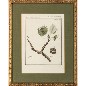 Four Hand-Colored Botanical Engravings