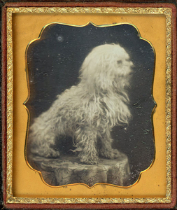 SHAGGY DOG DAGUERREOTYPE